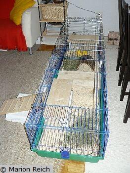 haltung k figbeispiel 1 f r zwei meerschweinchen. Black Bedroom Furniture Sets. Home Design Ideas