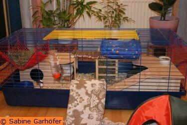 haltung k figbeispiel 2 f r zwei meerschweinchen. Black Bedroom Furniture Sets. Home Design Ideas